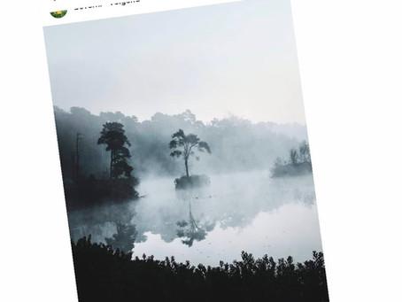 Op zoek naar dé tropische boom