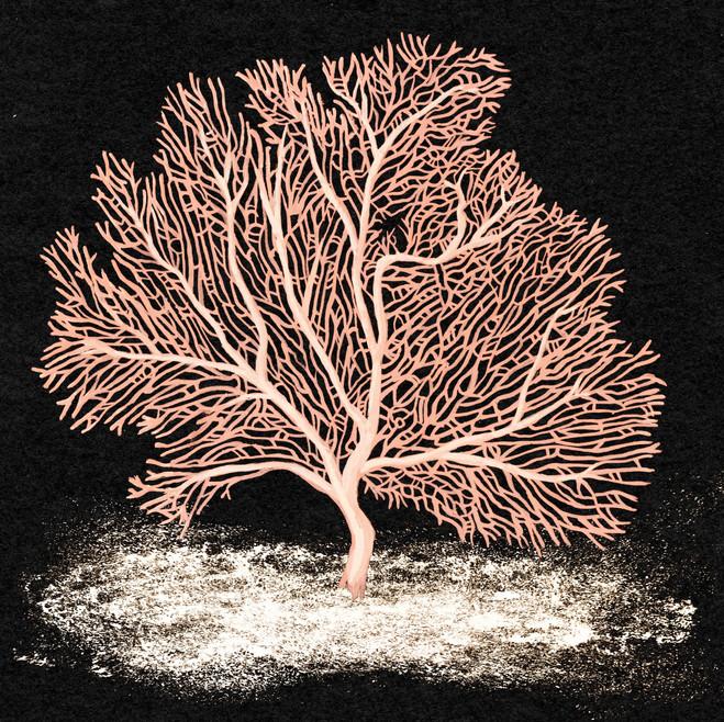 Endangered Coral - Annella Mollis