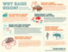 bison infographic 1-01.jpg