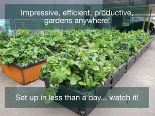A garden in a day... maybe less...