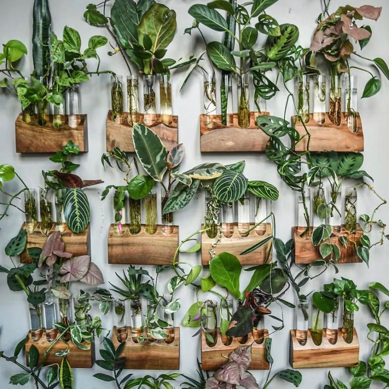 Plant Swap Social Event