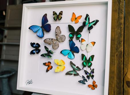 Butterfly Art is back!