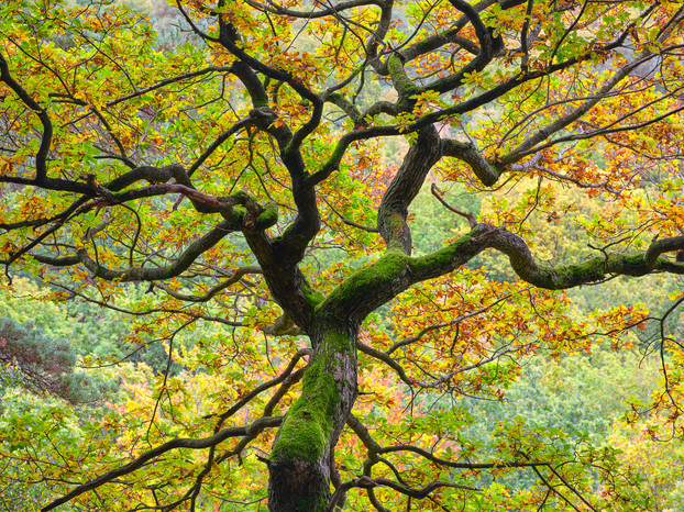 Padley Gorge. Derbyshire, England