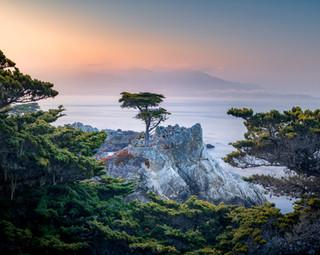 Lone Cypress tree. Pebble Beach, California, USA