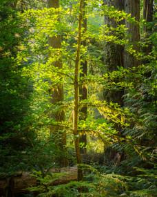 Elk Falls. British Columbia, Canada