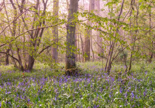 Crackley Woods. Warwickshire, england
