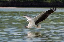eagle watching 2.JPG