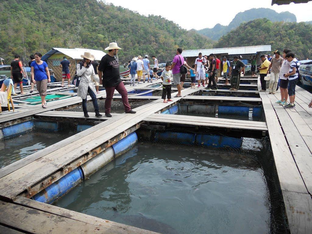 Island Escaped + Fish Farm Adv