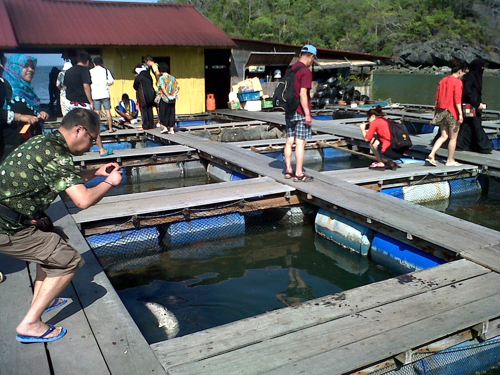 Fish Farm 1.jpg