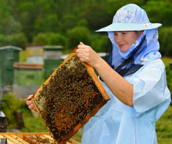 Beekeepers checking beehives