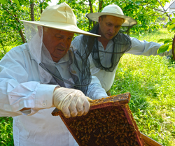 Beekeepers and beehives