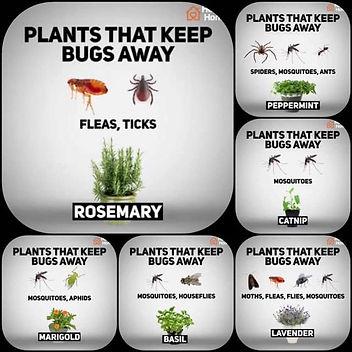 plantsforbugs1.jpg
