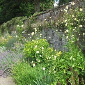 Who were Dartington Hall's women gardeners?