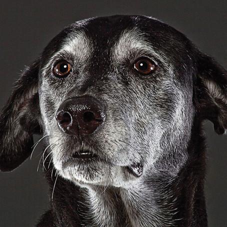 Mit tegyünk, ha idős állat ivartalanítását javasolja az állatorvos?