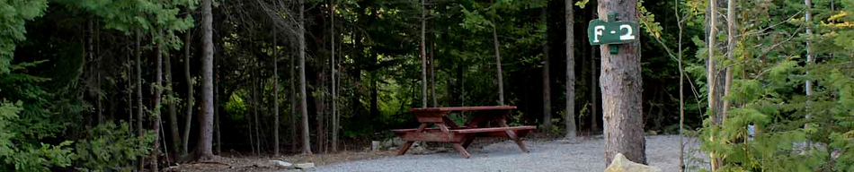 Secluded forest open air campsite with picnic table and service