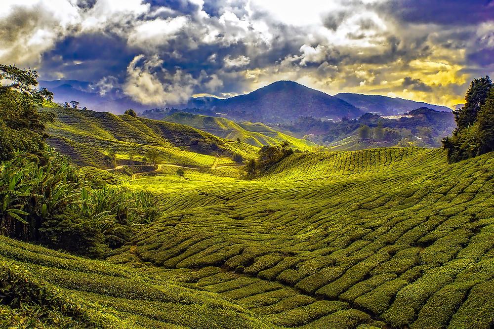 Malaysia - Bonjour Toowoomba