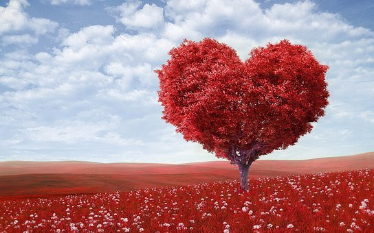 Heart-Shape, Tree, Red, Outdoors
