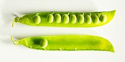 peas-1437587.png