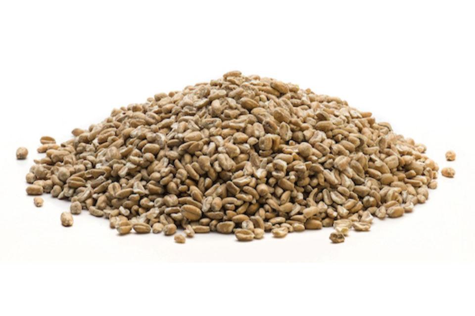 Kibbled Wheat Hard