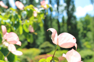 Joy Bland - Photography - Pink Flower