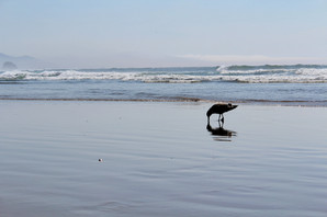 Joy Bland - Photography - Seagull