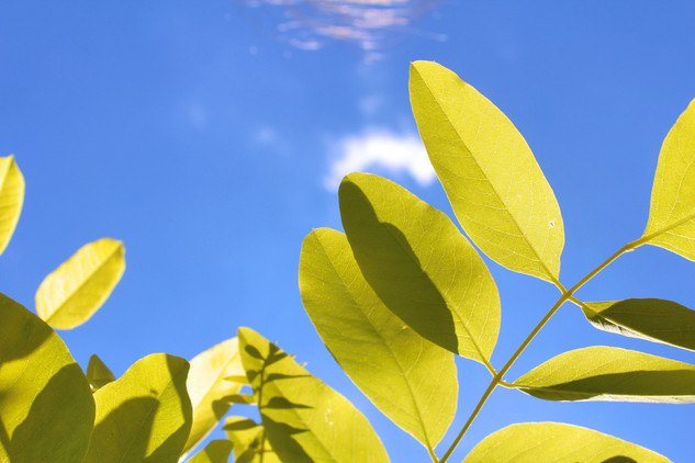 Joy Bland - Photography - Leaves