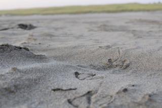 Joy Bland - Photography - Footprints
