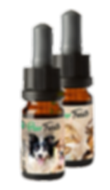 Paw-Treats Balance+ CBD Oil for Dogs and Cats