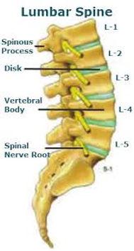 Lumbar spine w: nerve.jpeg