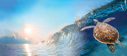Big Blue cannabis strain from Washington marijuana farm represented by surfing turtle