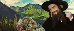 kosher marijuana represented by marijuana flower held by Hasidic Jew