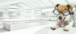 Chem Dawg marijuana strain represented by scientist dog in marijuana lab