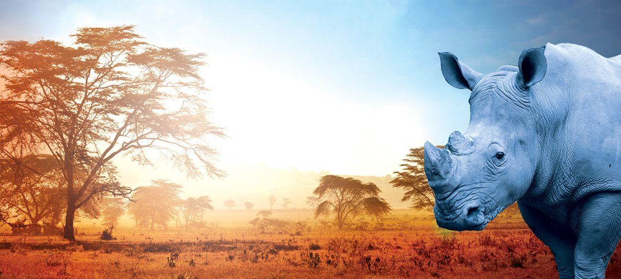 Blue Rhine from Washington marijuana supplier represented by blue rhino