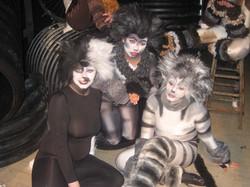 webcats 55