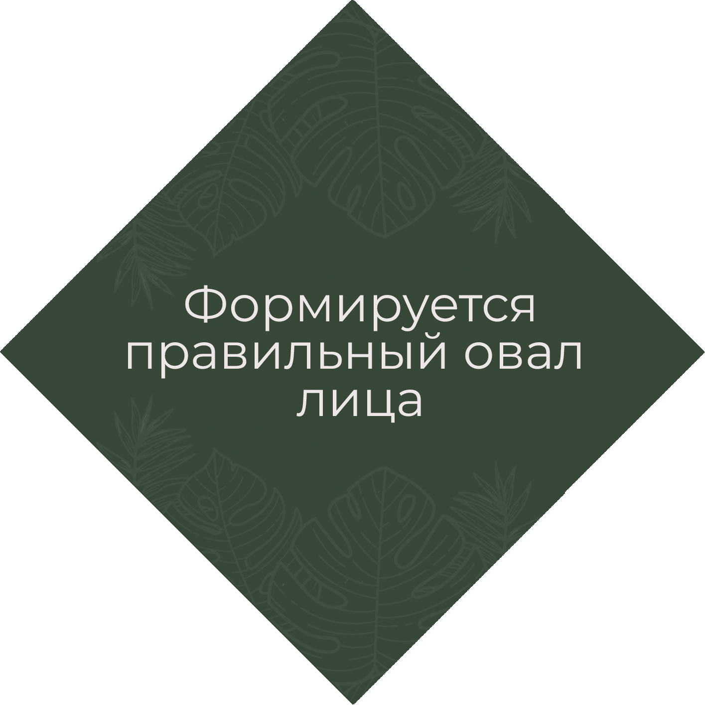 шил 2