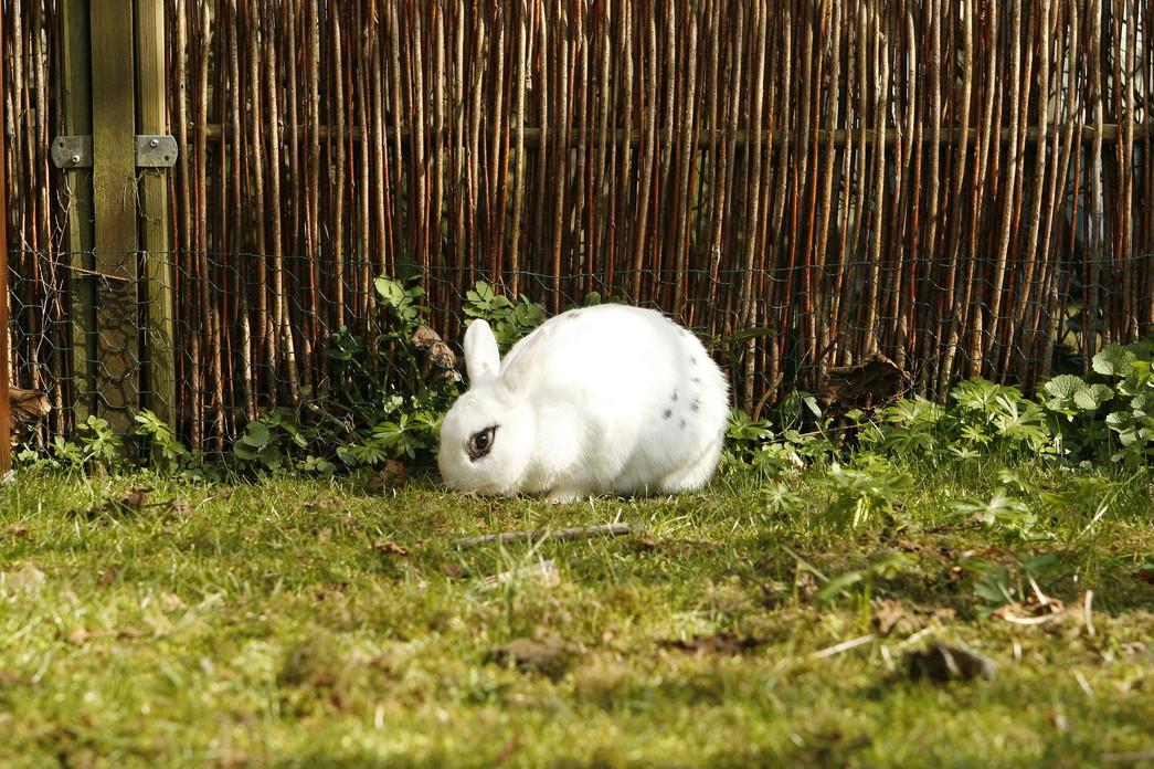 rabbit-2221819_1920.jpg