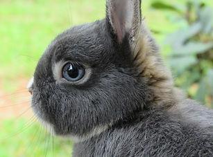 bunny-2653648_1920.jpg