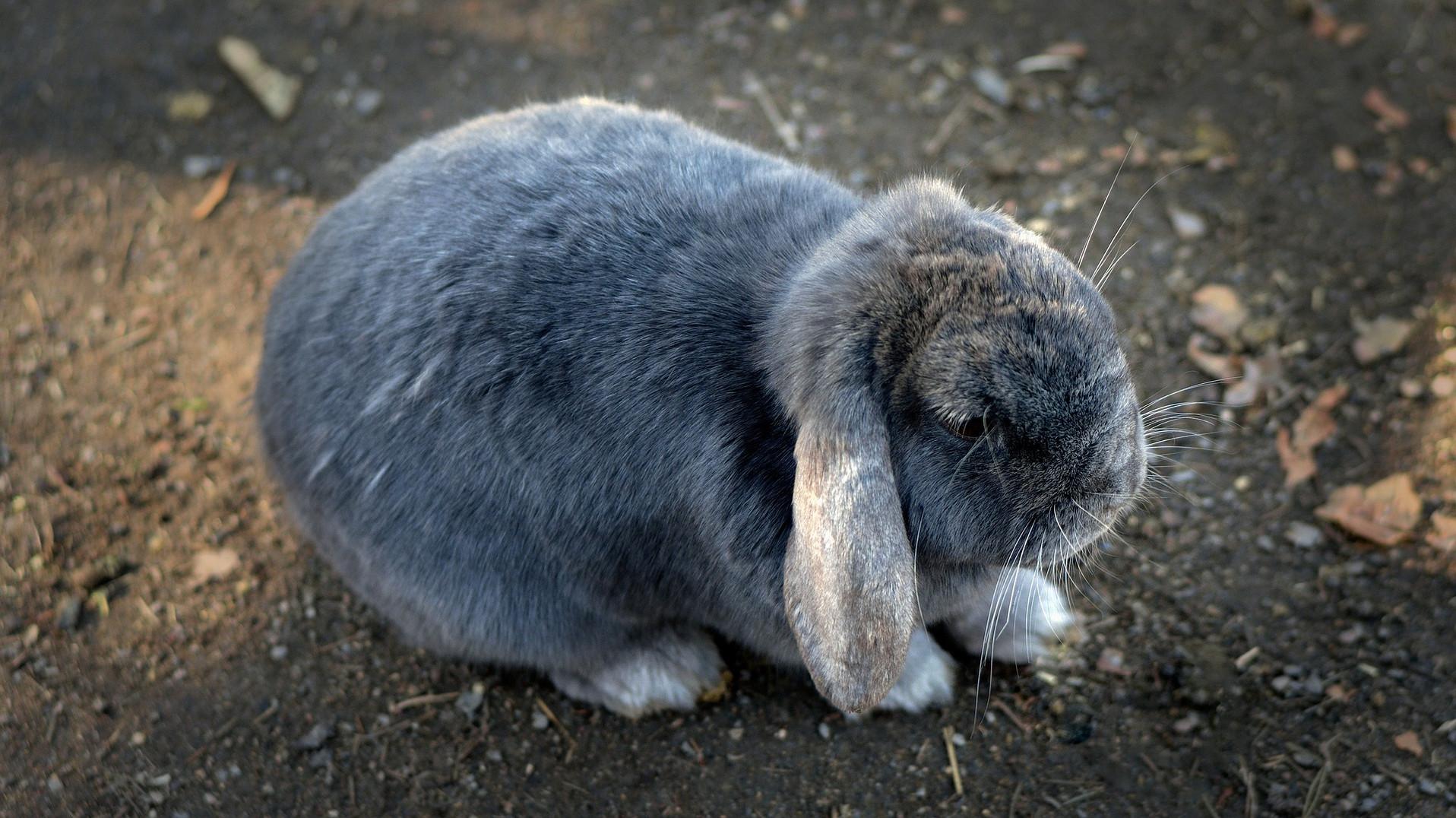 bunny-1276631_1920.jpg