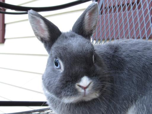 bunny-2653646_1920.jpg