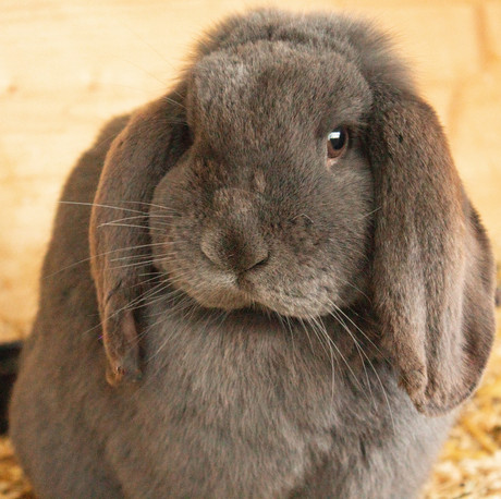 hare-4919086_1920.jpg