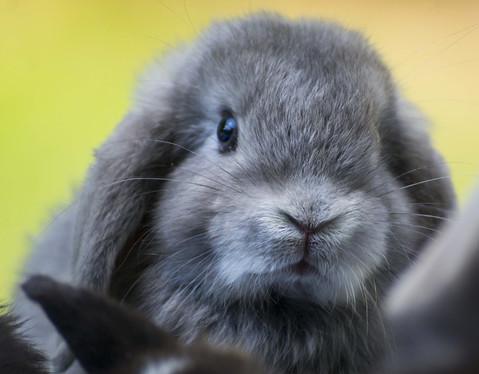rabbit-4355571_1920.jpg