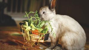 מה ארנבים אוכלים? המדריך המלא לפניכם!