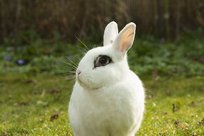 rabbit-717856_1920.jpg