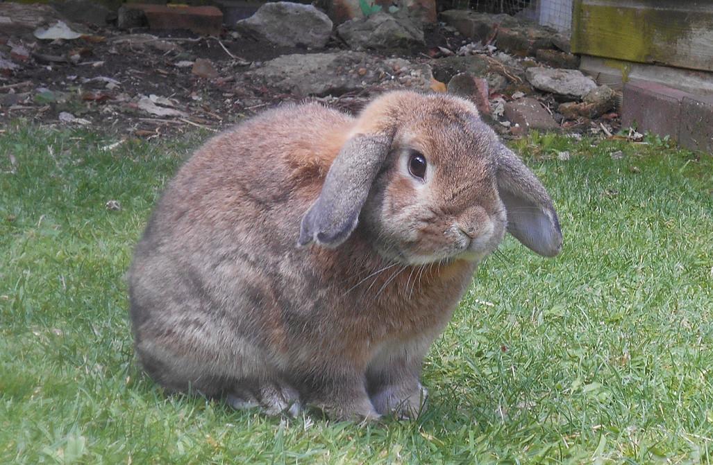 rabbit-422361_1920.jpg