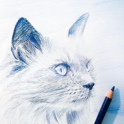 Portrait chat crayons de couleur