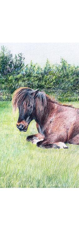 cheval_modif.jpg