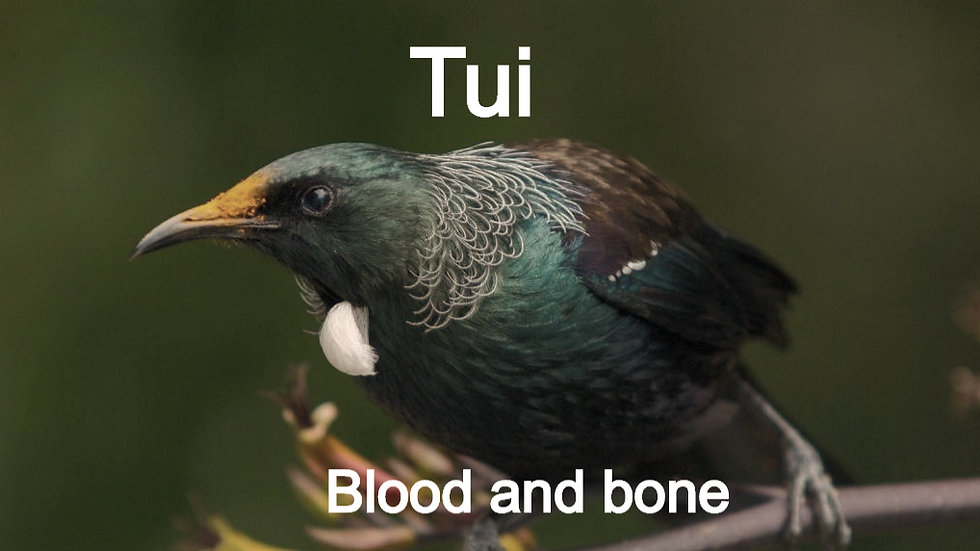 Tui Blood & Bone