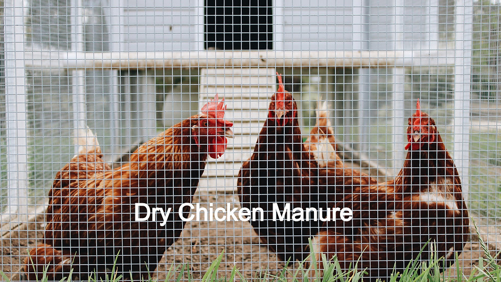 Dry Chicken Manure 30L When bagged