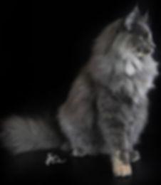'Talk to the Paw' ~ Callie Cat.jpg