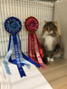 Croydon and Southern Counties Cat Shows